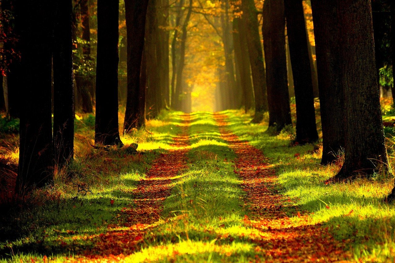 investir forêt